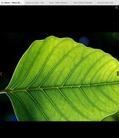 Leaves makes food