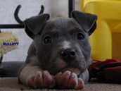 this are blue nose