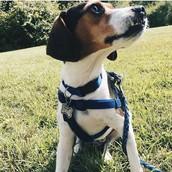 Berkley aka fave dog