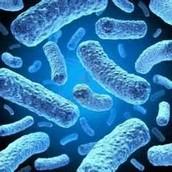 Las bacterias son ...
