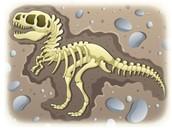 Dino fosils