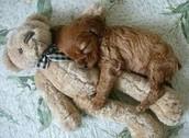 """....I....love...you......teddy...."""