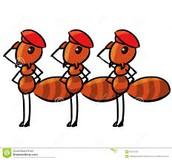 warrior ants