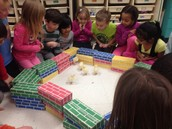Learning All About Our Chicks