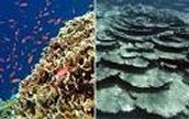 Coral Reef before and after pollution