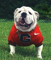 University of Georgia's Mascot- UGA