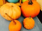 Our pumpkins - we named Beatrice's pumpkin after her - we will start our pumpkin unit next week!