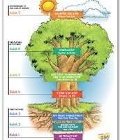 The 7 Habits Tree