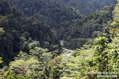 Tropical Jungles of Bhutan