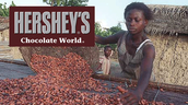 Hershey's slaves