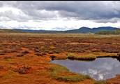 Treasured peatlands