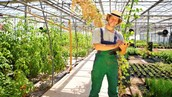 The Salary of a Greenhouse Manager