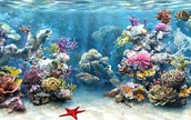 the people being affected by the death of coral reefs