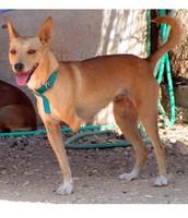 כלב פצוע שנשלח לצער בעלי חיים .