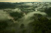 Yasuni National Park