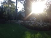 Sun & grass