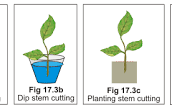 Replant
