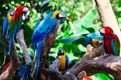 We not only show the exotic animals and plants of Rio, but, we specialize in birds!