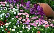 Уход за цветочно-декоративными растениями