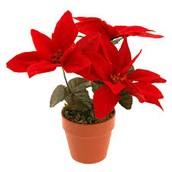 de rode Kerstster