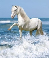 The Beautiful Horse