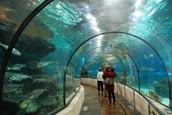 (Tomorrow!) Field Trip to the Dallas Aquarium