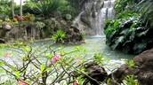 Zoological and Botanical Park