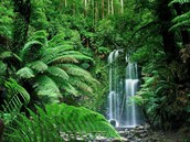 About the Tropical Rainforest