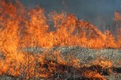 Prairie Fire Burn