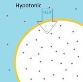 hypnotic solution
