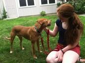 Mi Perro se llama Copper.