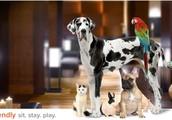 Bring along your pet!