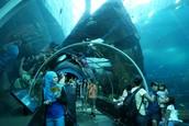 Un Aquarium (Sea Life Aquarium)