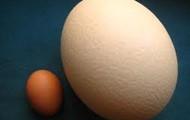 Scrambled Ostrich Eggs