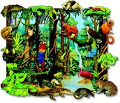 What animals and plants live in Rain forests?