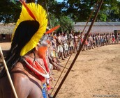 So many tribes but can they stay alive?