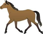 Cuando tengo 50 años voy a tener caballos.