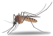 What is West Nile Virus?