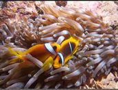 What Are Some Animals Competing for In the Great Barrier Reef?