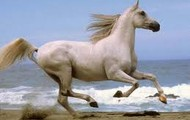 Horse running extremely fast.