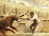 Wild Animal Fights