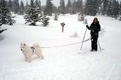 Ski Joring- Sleds of the future