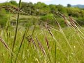 Temperate Grassland Biotic Factors