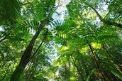 What is the Tropical Seasonal Forest?