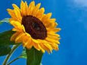 Tiley's Flower