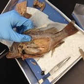 After Dissection