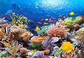 Did you know that Florida's Reef Tract is the only living barrier reef system in North America?