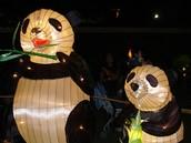 Festival of the Lights