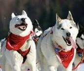 Happy doggys