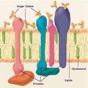 Lipids in the body